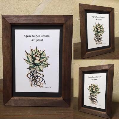 【送料込み】ART PLANT (Agabe Super Crown)