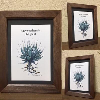 【送料込み】ART PLANT (Agabe utahensis)