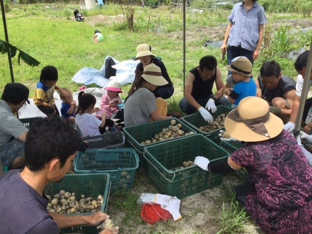 人参収穫体験のイメージその2
