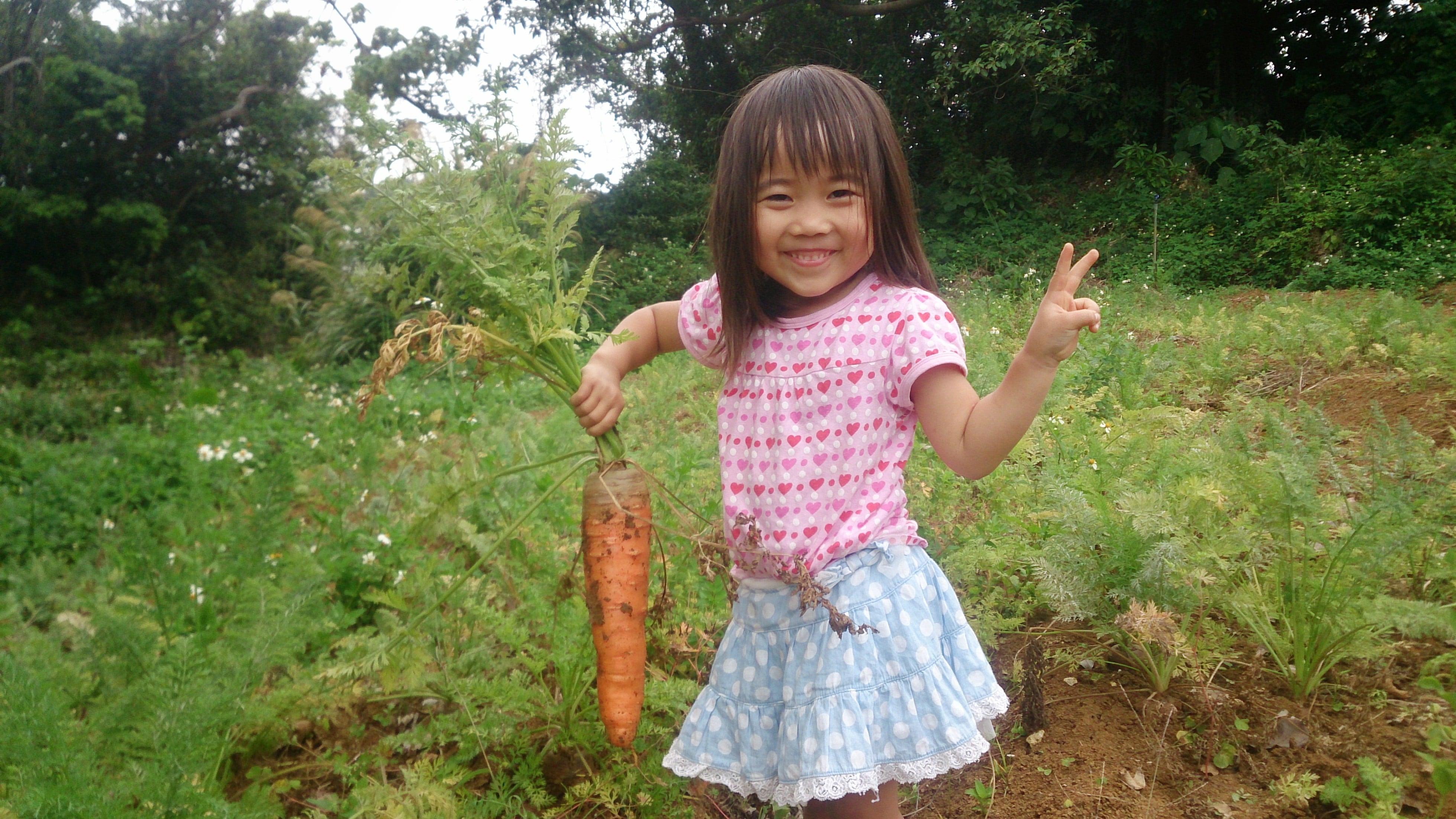 【メルマガ会員様限定】人参収穫体験のイメージその3