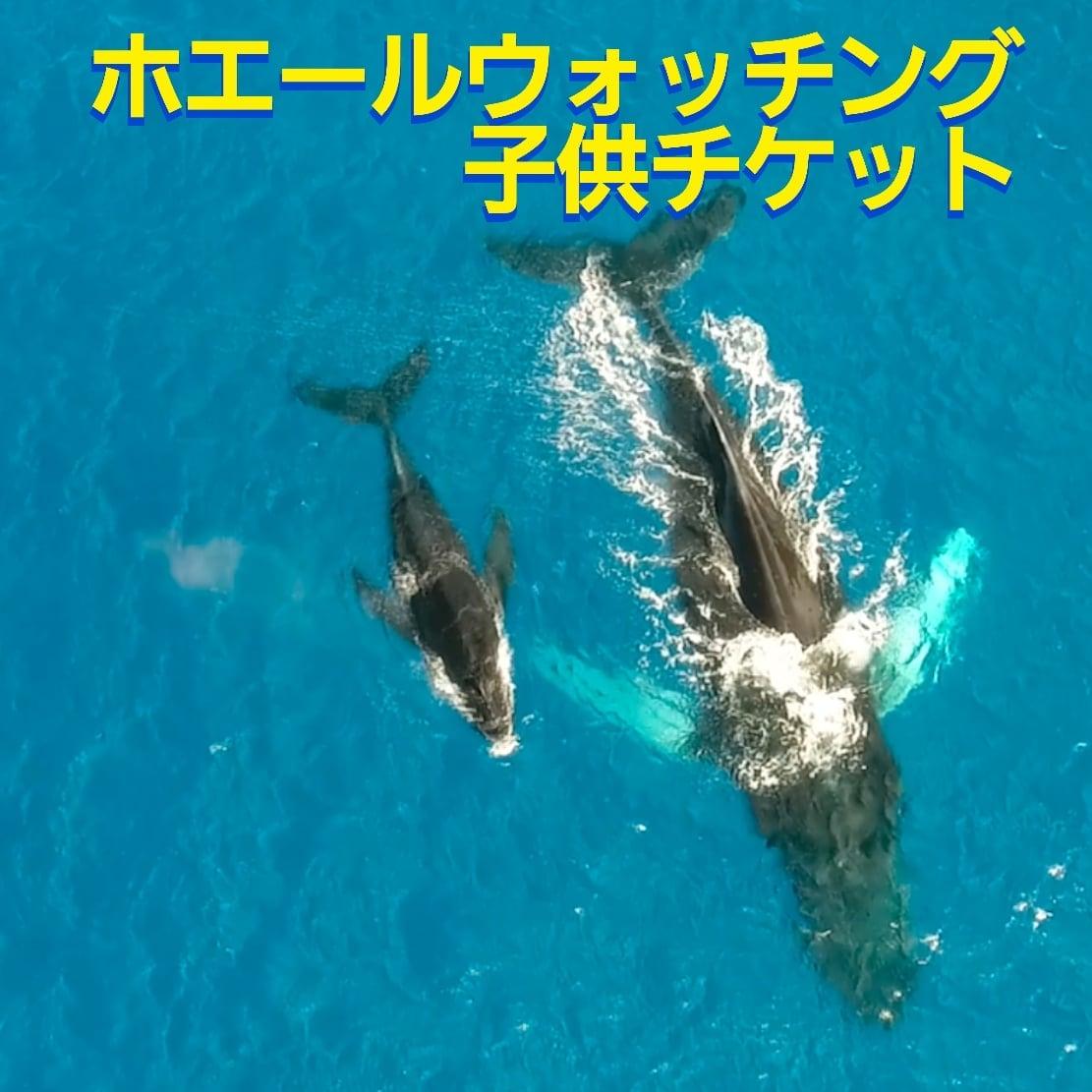 沖縄ホエールウォッチング子供チケットのイメージその1