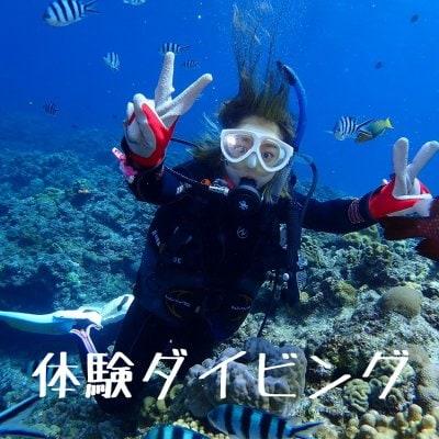 沖縄慶良間半日体験ダイビングお一人様