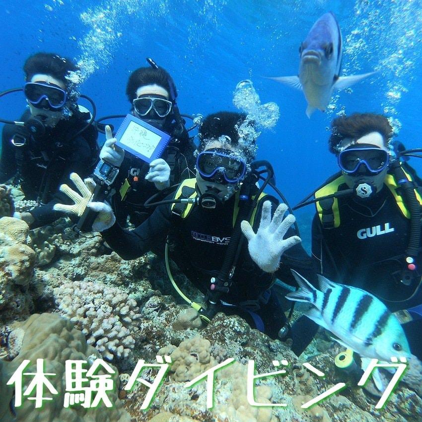 沖縄慶良間半日体験ダイビング4名様以上のイメージその1
