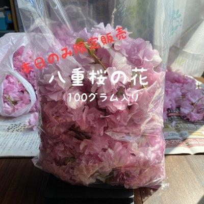 【八重桜の花】空sora