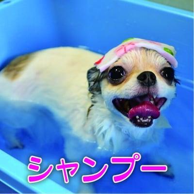 【現地払い専用】大型犬ペットシャンプー 18周年記念チケット