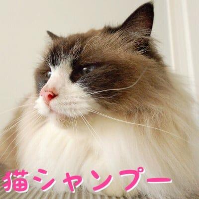 【現地払い専用】猫シャンプー 18周年記念チケット