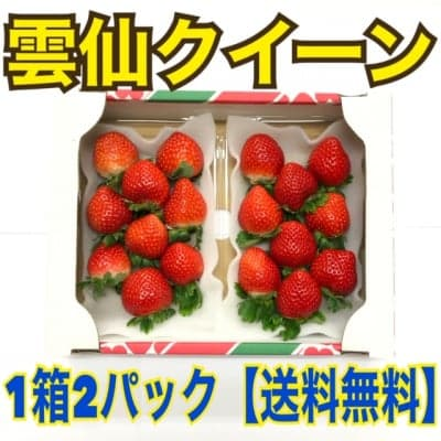 長崎産 甘くて濃い朝採り完熟いちご雲仙クイーン高ポイント還元※北海道のみ送料あり