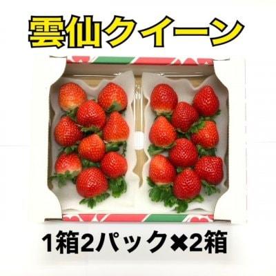 〈2箱〉長崎産 甘くて濃い朝採り完熟いちご雲仙クイーン
