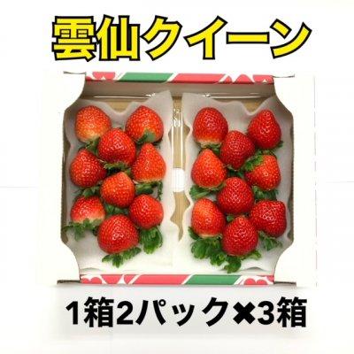 〈3箱〉オフ長崎産 甘くて濃い朝採り完熟いちご雲仙クイーン