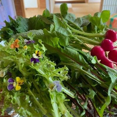 【招待者限定】『自然栽培の野菜を味わう試食会』 〜いただきます!大地の恵みと優しい食卓〜