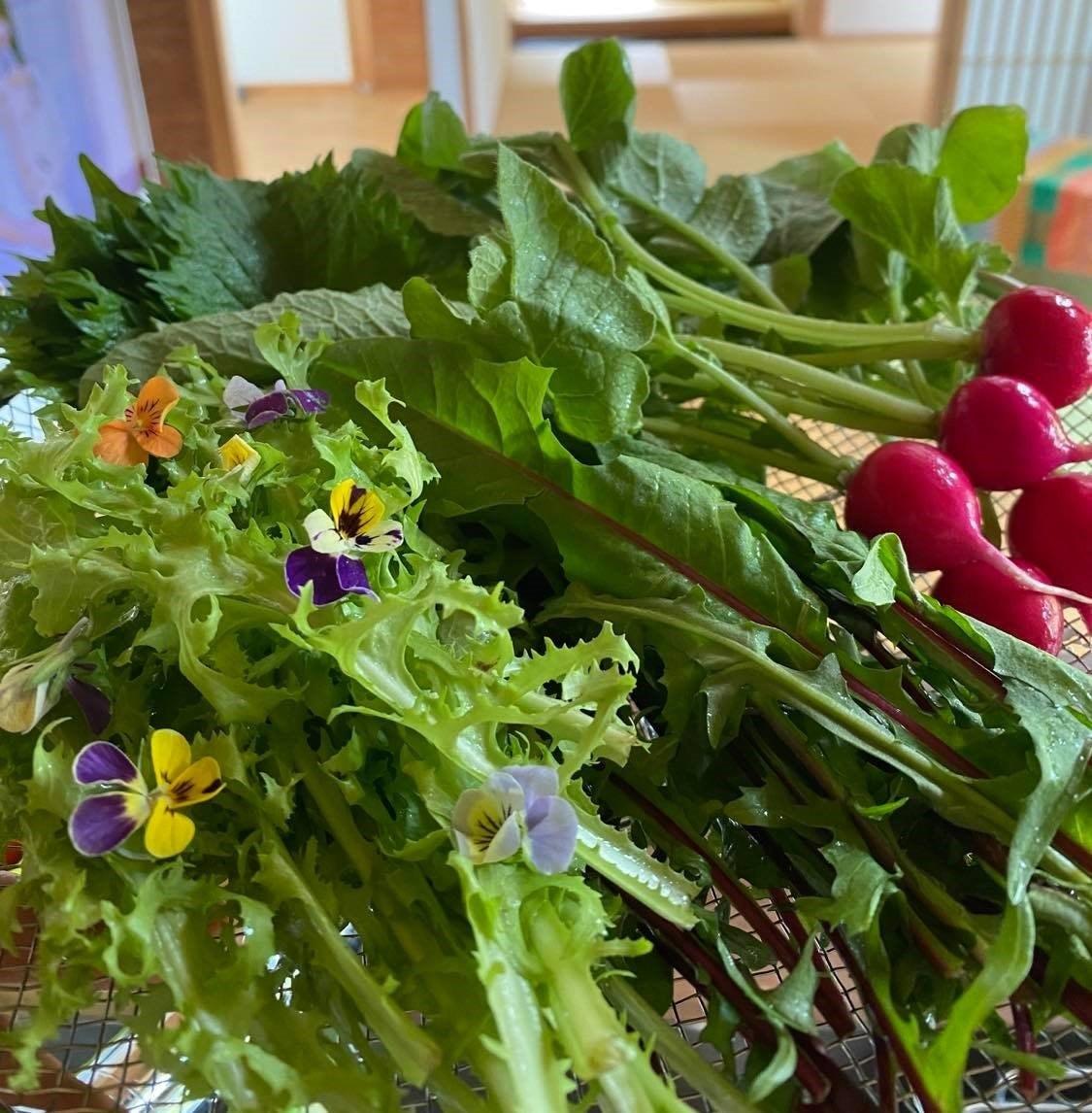 【事前予約者限定】『自然栽培の野菜を味わう試食会』 〜いただきます!大地の恵みと優しい食卓〜のイメージその3