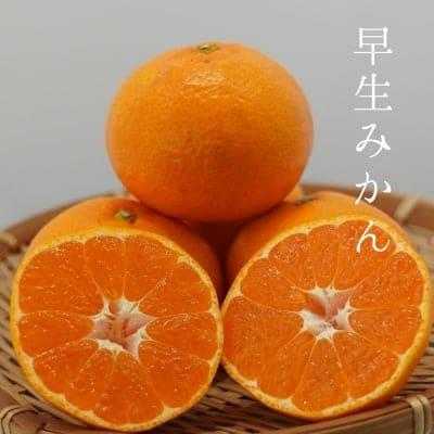 【予約受付中】【長崎県産】早生みかん 10kg