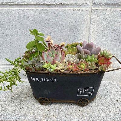 多肉植物の寄せ植え レトロワゴン