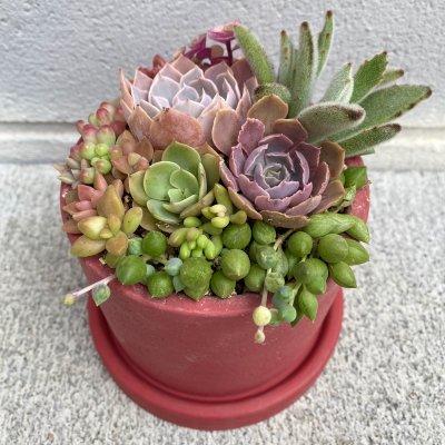 多肉植物の寄せ植え シンプル鉢 皿付き