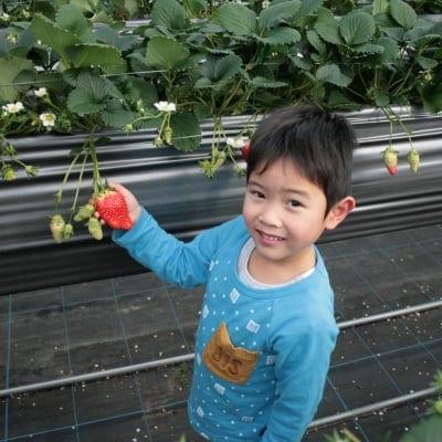 【4/21〜4/30】いちご狩り【子ども】入園料(3歳から小学生まで)