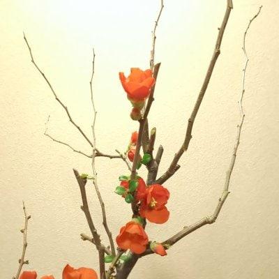 オンライン【お花のお困りごと相談会】30分