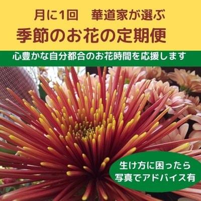 季節のお花の定期便【定】月1回