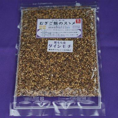 もち麦(ダイシモチ)の5袋セット送料無料