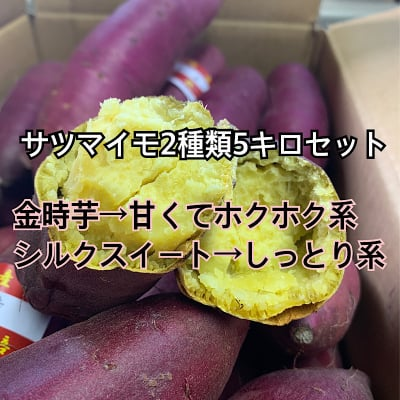 サツマイモ 追熟 5キロセット(金時芋・シルクスイート)新潟 下田産
