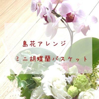 5月の花贈り ミニ胡蝶蘭アレンジメント