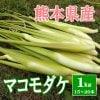 マコモダケ1㎏(15〜20本)熊本県産 産地直送 送料無料 無農薬 10月初旬から中旬まで発送予定 期間限定