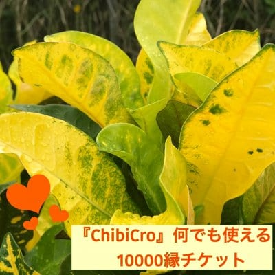 『ChibiCro』何でも使える10000縁チケット