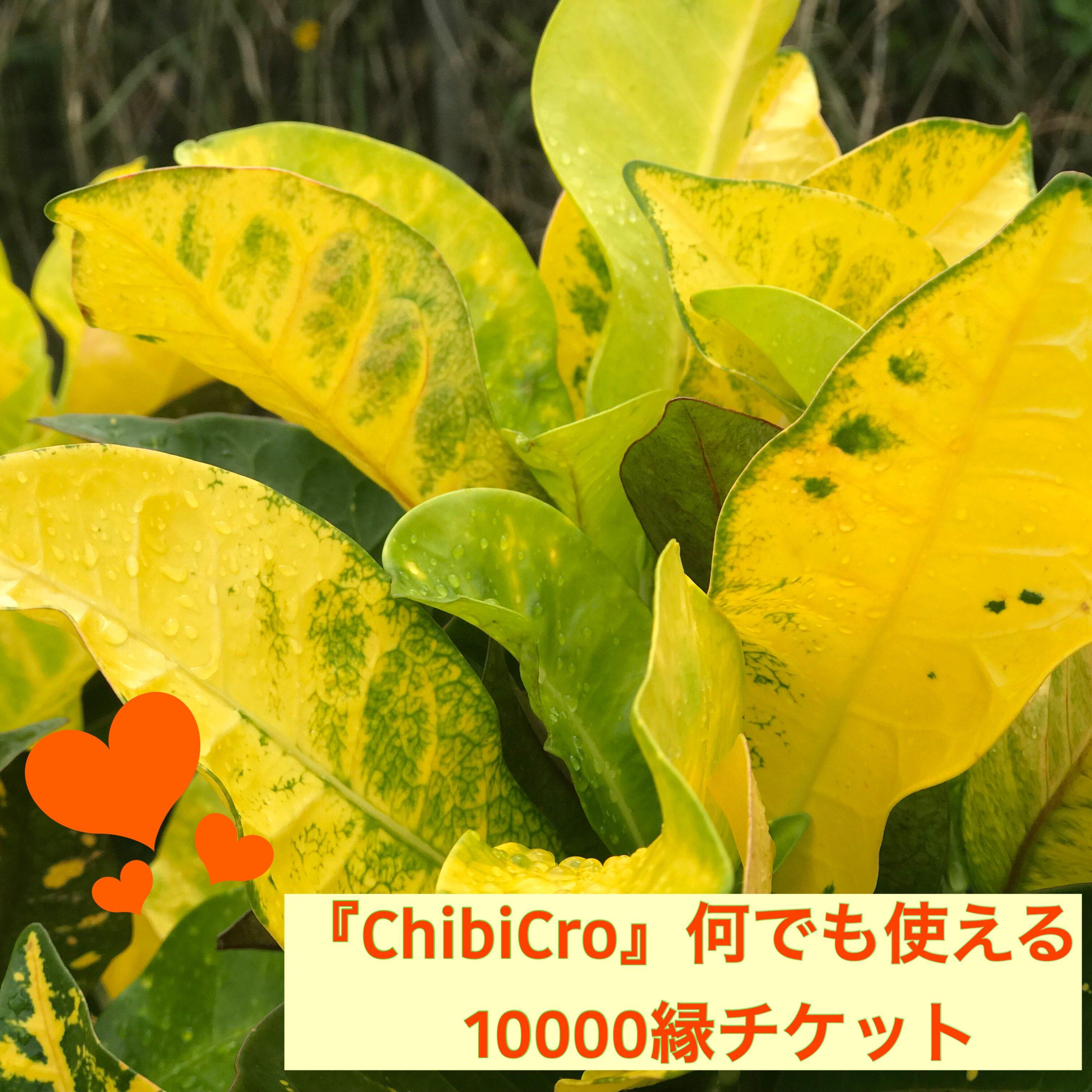 『ChibiCro』何でも使える10000縁チケットのイメージその1