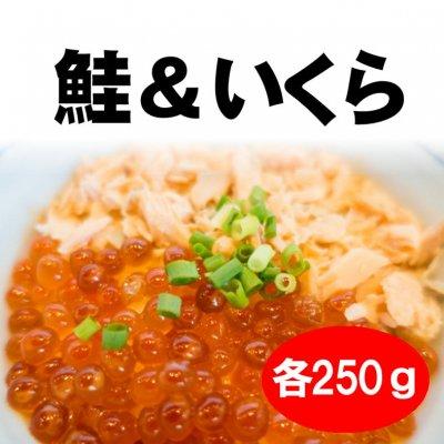 【お中元】鮭&いくら丼セット|KA306|