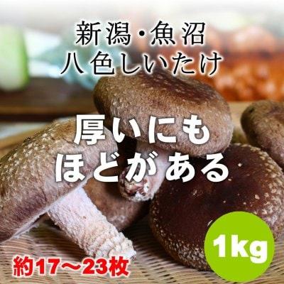 【魚沼産】八色しいたけ/1kg/産地直送[冷蔵品]同梱可能