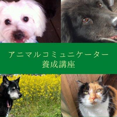 《オンライン》アニマルコミュニケーター養成講座(8時間)【愛犬・愛猫セッション(60分)付き】