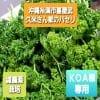 『KOA様専用』久米さん家のパセリ