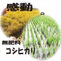 新米無肥料コシヒカリ 白米5キロ