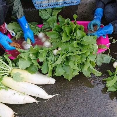 自然栽培畑での野菜のお話し会(お食事つき)