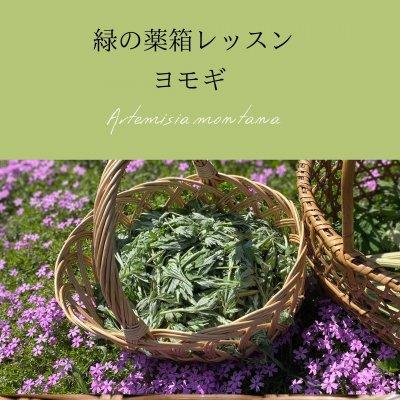 【オンライン&教室】緑の薬箱レッスン〜ヨモギ