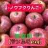 【ノウフクりんご】サンふじ(家庭用)10Kg
