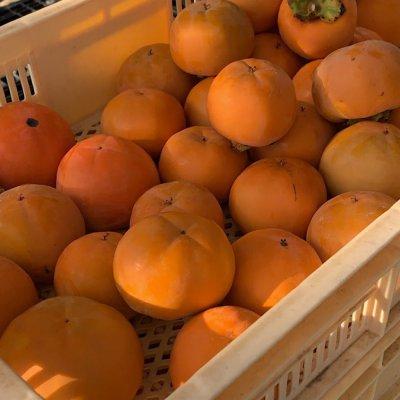 富有柿1箱14〜15個入り