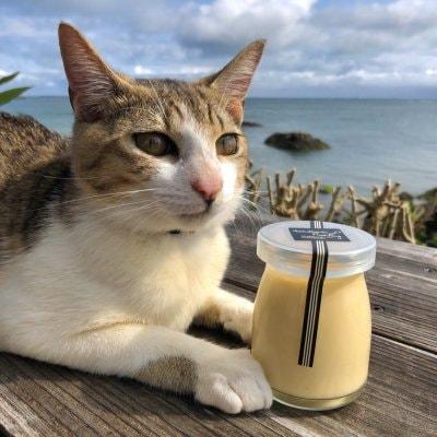 【無料宅配サービス付き】石垣島島内限定 無添加ミネラル豆乳プリン