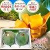沖縄県産高級キーツマンゴー秀品 大玉( 1.7kg〜2kg) 2玉入り 贈答用 ギフト