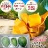 沖縄県産キーツマンゴー良品 ( 1.7kg〜2kg) 傷あり大きさバラバラ