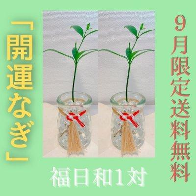 「開運なぎ」福日和1対〜ふくびより〜