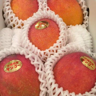【完売致しました!ありがとうございます】沖縄産完熟アップルマンゴー...