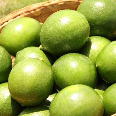 無農薬栽培 宮古島産マイヤーレモン 約2kg