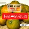 【限定5個】沖縄産タンカン約5kg〜農薬不使用・化学肥料不使用〜【送料込み】【サイズ混合】