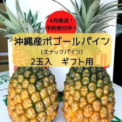 ギフト用パイン2玉から3玉入|沖縄産ボゴールパイン