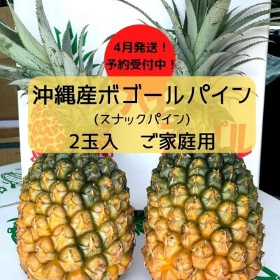 ご家庭用パイン2玉〜3玉入|沖縄産ボゴールパイン|