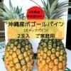 【予約受付開始!】沖縄産ボゴールパイン ご家庭用 2玉入