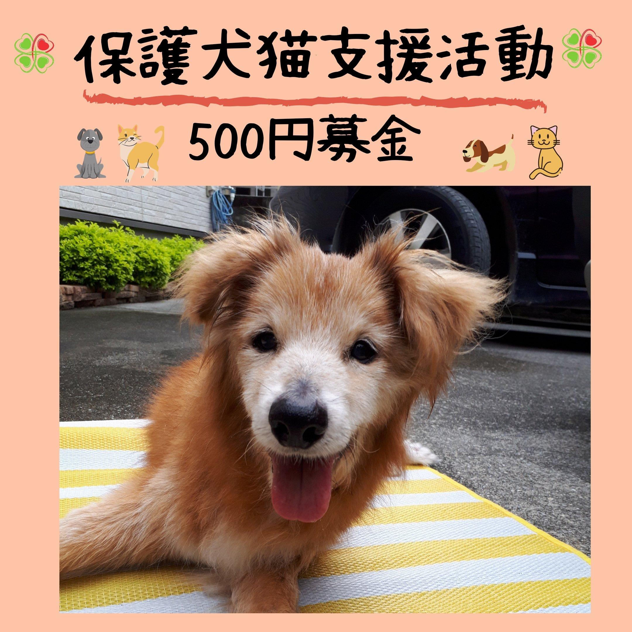 保護犬猫支援活動500円募金*沖縄(ポイントでの寄付も可能)のイメージその1