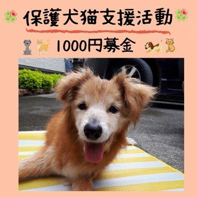 保護犬猫支援活動1000円募金*沖縄(ポイントでの寄付も可能)