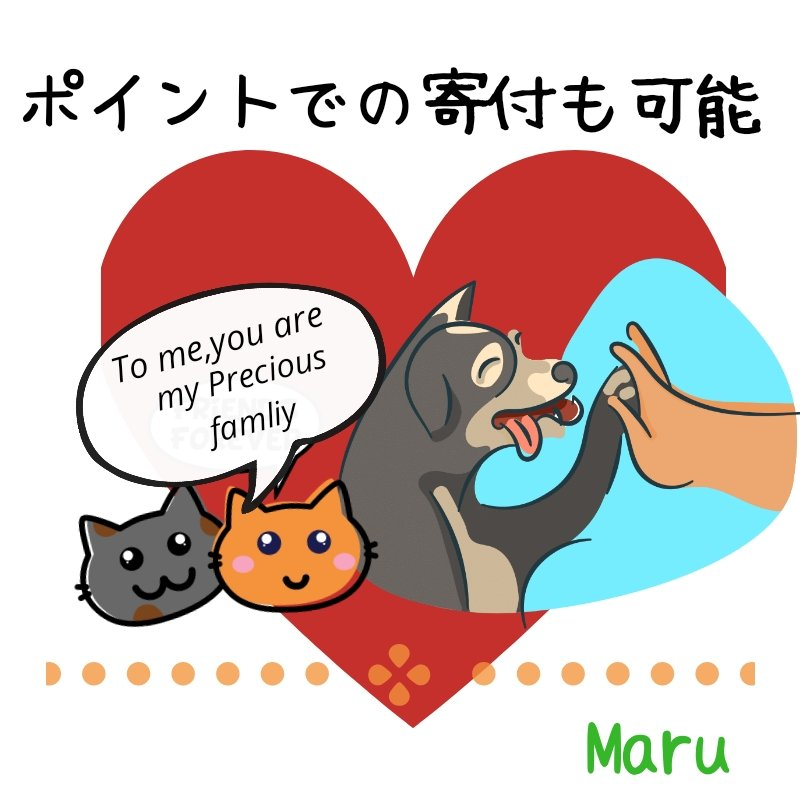 保護犬猫支援活動1000円募金*沖縄(ポイントでの寄付も可能)のイメージその2