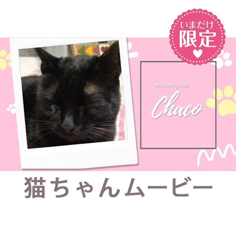 映像制作|福岡|鹿児島|ステキメーカー【映像商品】ペット「猫ちゃんムービー」わんちゃんもOKのイメージその1